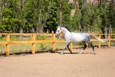 Free Beautiful Horse Stock Photography - 15266342
