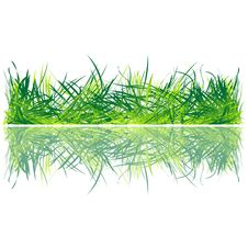 Free Fresh Grass Royalty Free Stock Images - 15266359