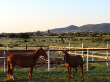 Free Horses Royalty Free Stock Images - 15267709