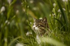 Free Cat In The Garden Stock Photo - 15267970