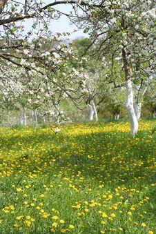 Free Summer Garden Stock Image - 15268341