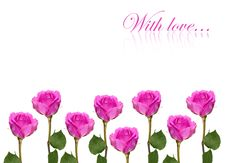 Free Pink Rose Isolated Stock Images - 15268604