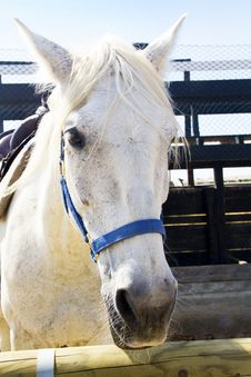 Free Horse Stock Images - 15269294