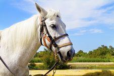Free Horse Stock Photo - 15269380