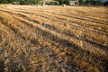 Free Fields Grain With Bales Stock Photo - 15271360