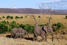 Free Elephant Family Babies Stock Photo - 15270610