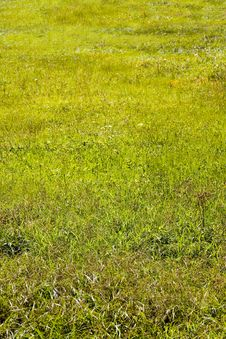Free Green  Background, Young Grass Stock Images - 15271554