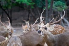 Free Deer. Stock Image - 15272491
