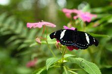 Free Grecian Shoemaker Butterfly Stock Image - 15273111