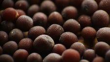 Free Mustard Seeds Macro Stock Photo - 15273200