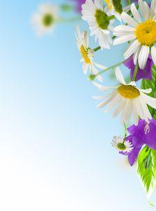 Free Daisywheels Stock Image - 15273421