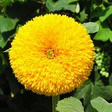 Free Yellow Royalty Free Stock Image - 15273456