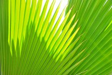 Free Leaves Of Palm Royalty Free Stock Photos - 15274018