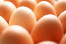 Free Eggs Royalty Free Stock Images - 15274169
