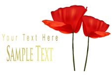 Free Two Poppies. Royalty Free Stock Photography - 15275717