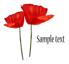 Free Two Red Poppies. Stock Photo - 15275720