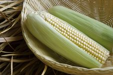 Background Of Sweetcorn Stock Image