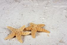 Free Starfish On The Beach With Copy Space Stock Photos - 15279183