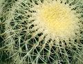 Free Cactus Stock Photos - 15284683