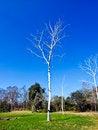 Free Tree Stock Photos - 15284823