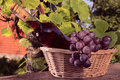 Free Basket Stock Photo - 15287850