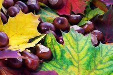 Chestnut And Leafs Background Royalty Free Stock Photos