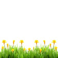 Free Spring Grass With Daffodils Stock Photos - 15280573