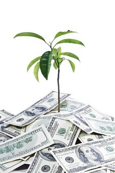Free Tree Growing On Dollar Soil Royalty Free Stock Photo - 15281465