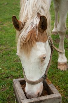 Free Eating Horse 1 Royalty Free Stock Images - 15281769