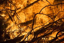 Free Burning Forest Royalty Free Stock Image - 15282206