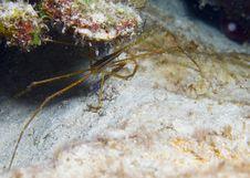 Free Spider Crab Royalty Free Stock Photos - 15283978