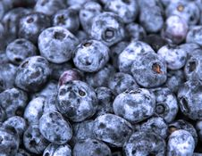 Free BlueBerries Royalty Free Stock Photography - 15284117
