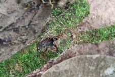 Free Root With Moss Royalty Free Stock Image - 15284986