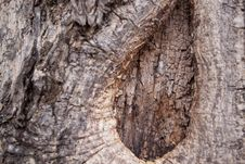 Free Bark Royalty Free Stock Images - 15285219