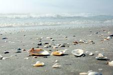 Free Shell Shore Stock Photography - 15286772
