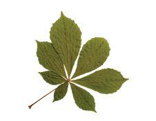 Free Leaf Stock Images - 15289144