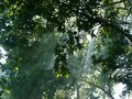 Free Historic Plane Tree 2 Royalty Free Stock Photography - 15292807