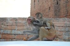 Monkey And Her Baby Royalty Free Stock Photos