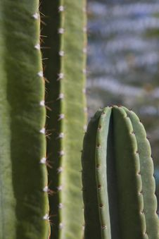 Cactus Close-Up Stock Images
