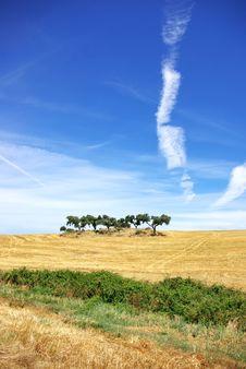 Free Trees In Alentejo Field. Stock Photos - 15290473