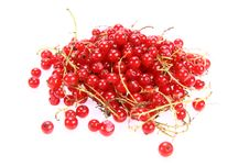 Free Red Currant Royalty Free Stock Photography - 15291847