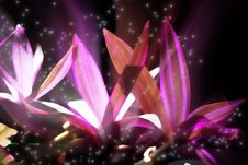 Free Glowing Flowers Royalty Free Stock Photography - 15292067