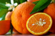 Free Mature Orange And Flowers. Stock Photos - 15295213