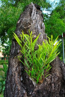 Free Tree On Tree Stock Images - 15298414