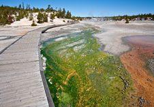Free Green Cyanidium Algae Stock Images - 15298654