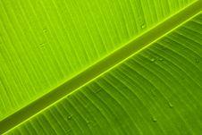 Free Banana Leaf Stock Images - 15299314