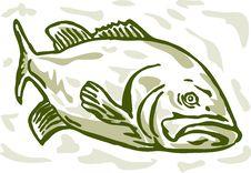 Free Largemouth Bass Drawing Stock Photography - 15299932