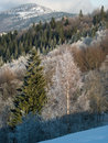 Free Winter Rime Forest Royalty Free Stock Photo - 1530505