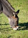 Free Donkey 2 Stock Image - 1538241