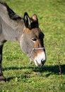 Free Donkey 3 Royalty Free Stock Photos - 1538378